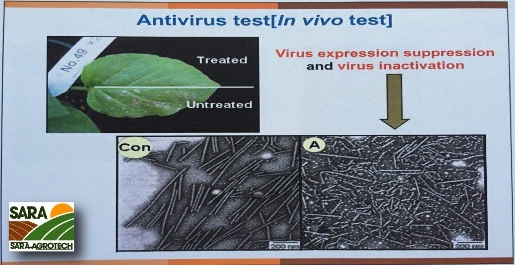 Kiểm soát bởi Virutu trong phòng thí nghiệm, các virus bị kiểm soát duỗi thẳng ra.